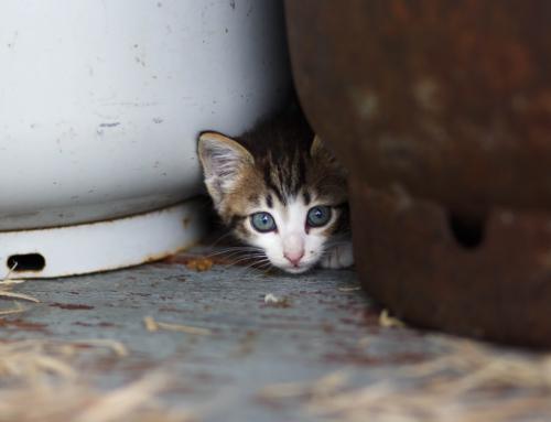 How NOT to be a Scaredy-Cat | Pastor Rachel Billups